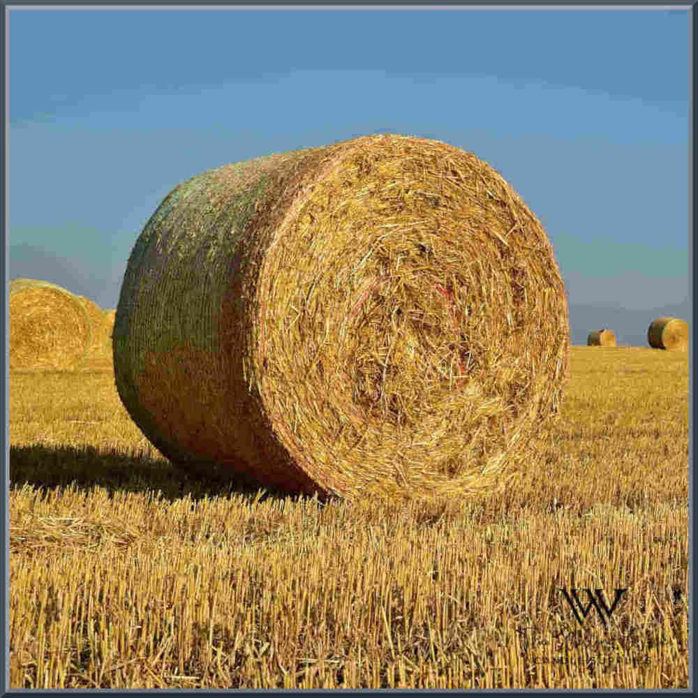 Dry Tobacco & Hay Fragrance Oil