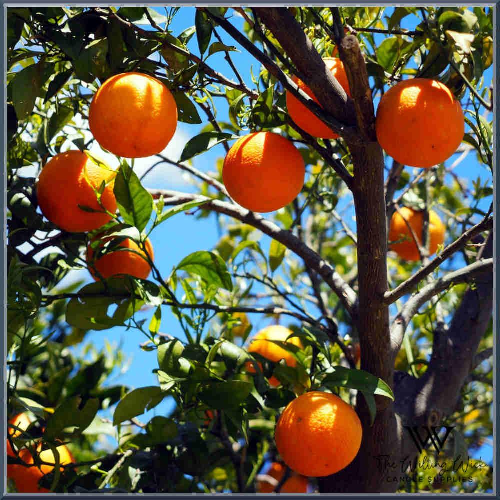 Orange & Bergamot Fragrance Oil